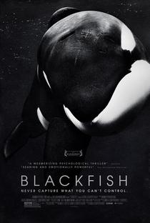 Assistir Blackfish - Fúria Animal Online Grátis Dublado Legendado (Full HD, 720p, 1080p) | Gabriela Cowperthwaite | 2013
