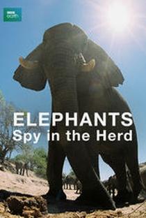 Assistir Elephants - Spy in The Herd Online Grátis Dublado Legendado (Full HD, 720p, 1080p)      2003