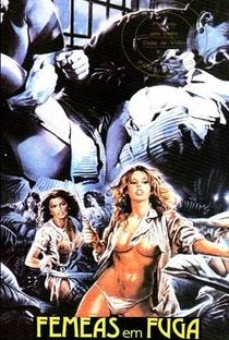 Assistir Fêmeas em Fuga Online Grátis Dublado Legendado (Full HD, 720p, 1080p)   Michele Massimo Tarantini   1985