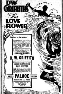 Assistir Flor de Amor Online Grátis Dublado Legendado (Full HD, 720p, 1080p) | D.W. Griffith (I) | 1920