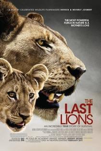 Assistir Os Últimos Leões Online Grátis Dublado Legendado (Full HD, 720p, 1080p) | Dereck Joubert | 2011