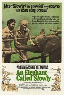Assistir Um Amor De Elefante Online Grátis Dublado Legendado (Full HD, 720p, 1080p)   James Hill (I)   1970