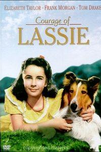 Assistir A Coragem de Lassie Online Grátis Dublado Legendado (Full HD, 720p, 1080p) | Fred M. Wilcox | 1946