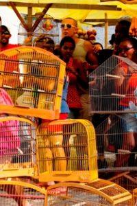 Assistir O Milagre dos Pássaros Online Grátis Dublado Legendado (Full HD, 720p, 1080p)   Adolfo Rosenthal   2012